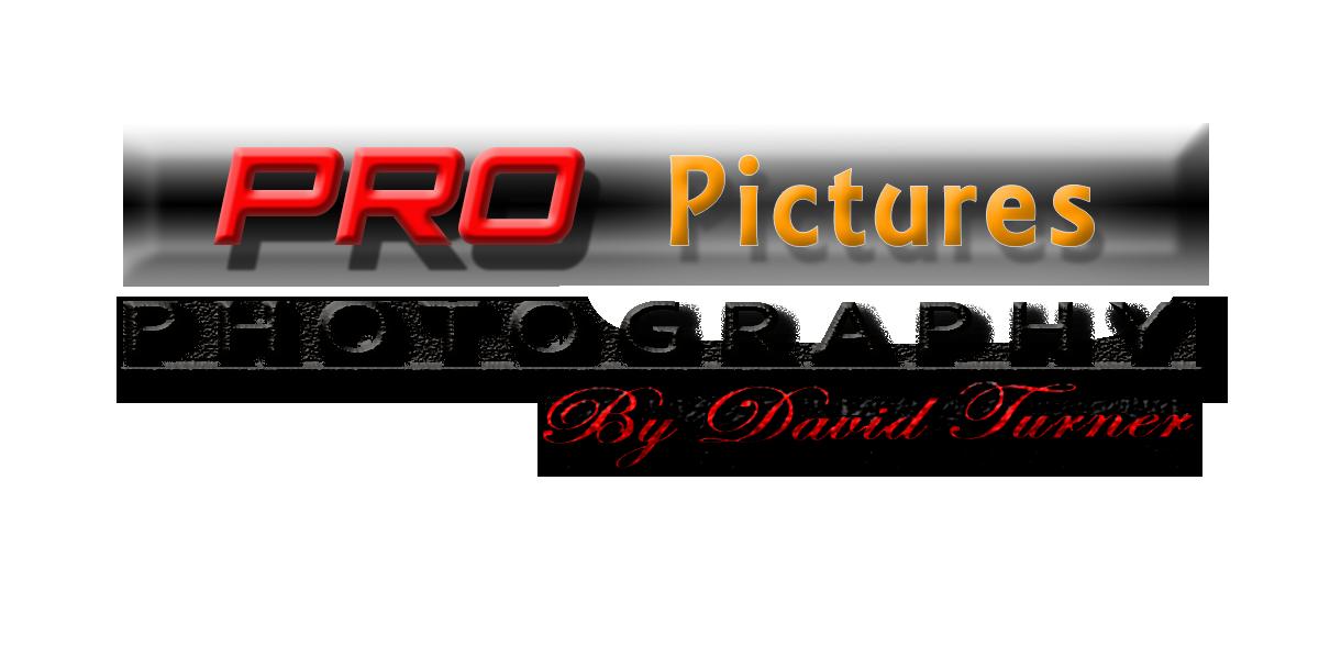 Pro Pictures floor plan Nashua